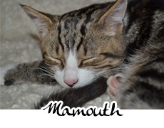 photographies d'un p'tit chat nommé Mamouth