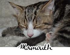 photographies d'un p'tit chat nommé Mamouth